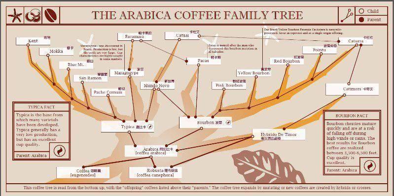 cafe-咖啡品种树状图