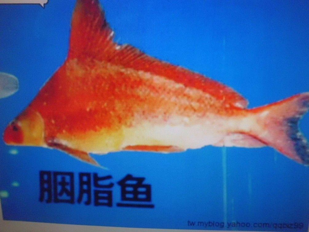 台灣漁家莊-製品の紹介
