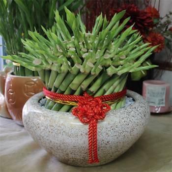 《圓滿如意》開運竹盆栽