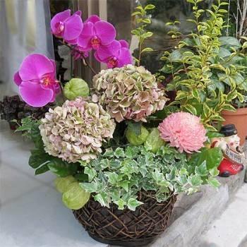 《生氣蓬勃》精緻桌上盆花