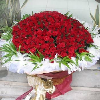 《天天愛你》365朵玫瑰花束
