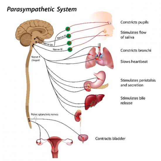 施信宏善循環「道法自然認識人類第二個大腦」《腦腸軸大腦和腸道》