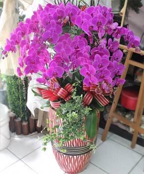 《滿堂增輝》15株大花器尊榮蝴蝶蘭盆栽