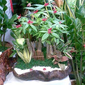 《發財樹》桌上型馬拉巴栗山水盆栽