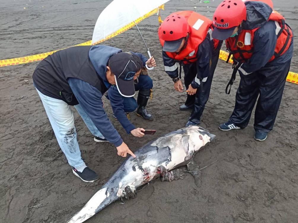 宜蘭外澳沙灘又見保育鯨豚擱淺死亡