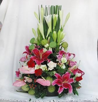 《鴻運高照》迎賓盆花