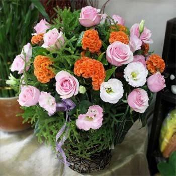 《喜悅》盆花