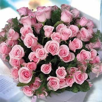 《世紀之愛》田園自然風99朵鐵達尼玫瑰