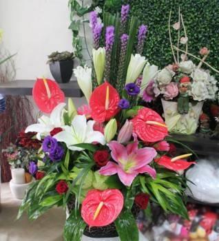 《平步青雲》祝賀盆花