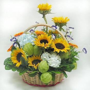 向日葵盆花
