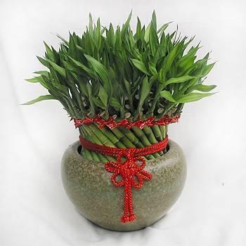 《豐年》開運竹盆栽
