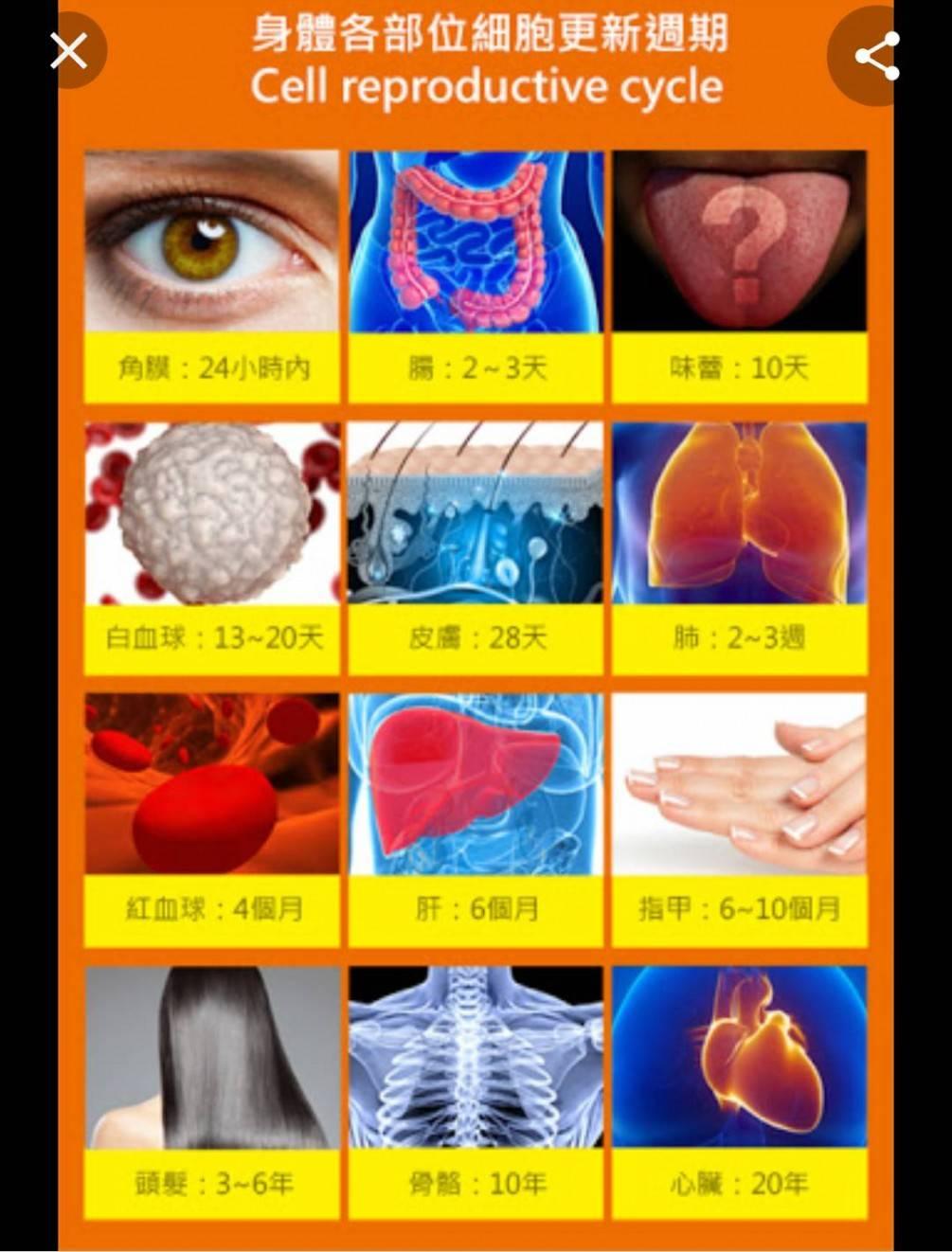 人體具有神奇的自我修復功能,一些器官和細胞會持續不斷地更新,美國科學家與醫學專家稱之為「維護性細胞再生」