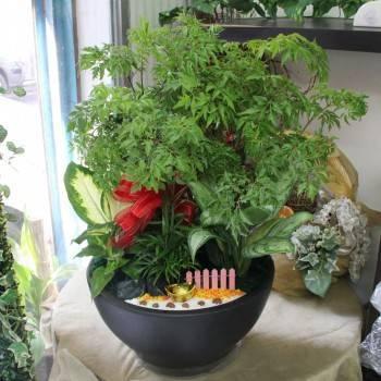 《富貴榮華》富貴樹盆栽