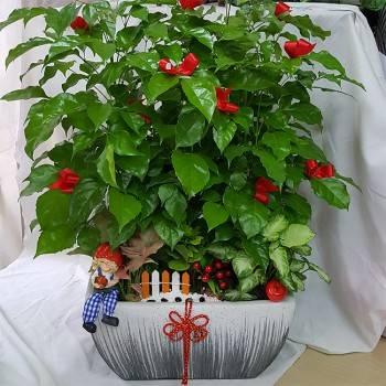 《財旺亨通》造景旺財樹桌上盆栽