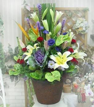 《福星高照》精選桌上盆花