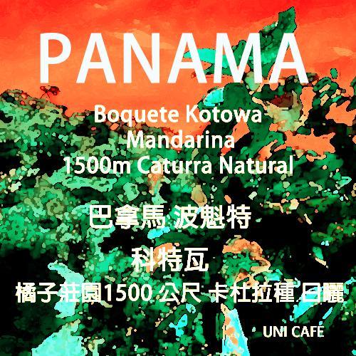 巴拿馬 波奎特 科特瓦 橘子莊園 1500 公尺 卡杜拉種 日曬