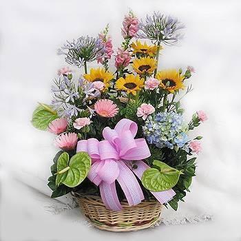 《花開富貴》盆花